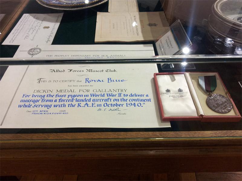 Fotografia medalu Dickin dla gołębia